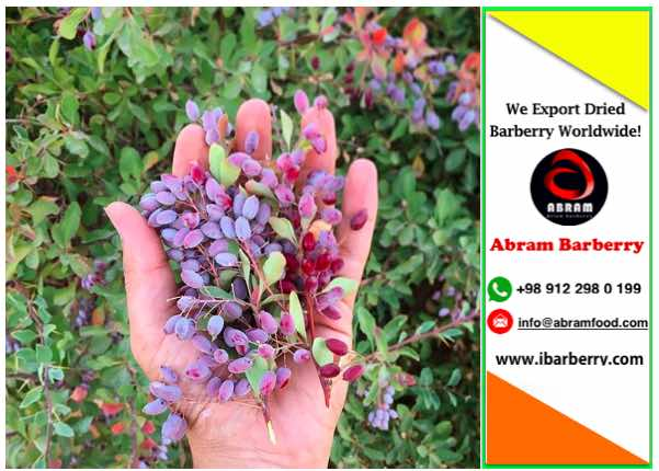 black barberry