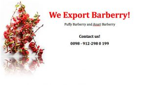 exporting barberry