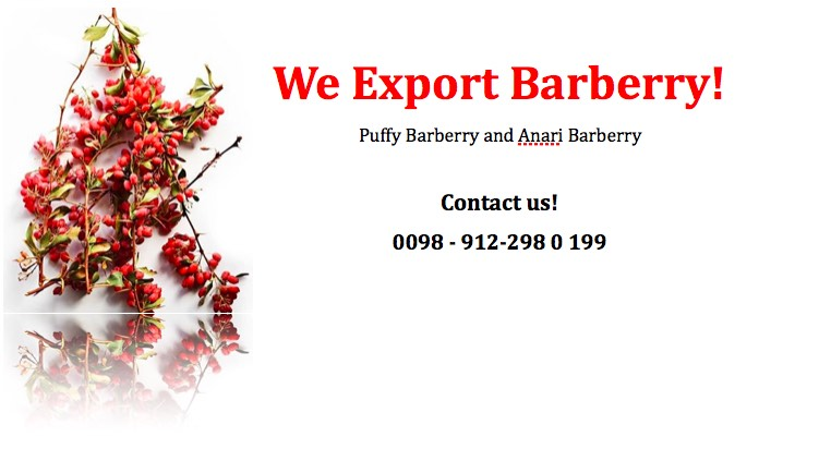 buying dried barberrry
